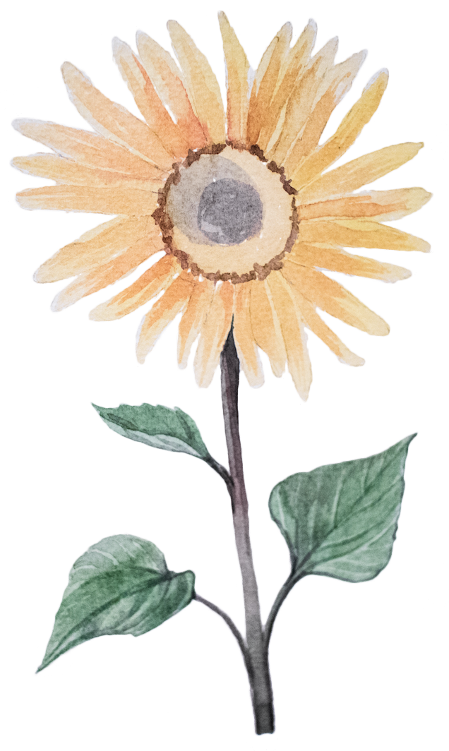 Sunflower Lecithin in Smart Drugs Global Focus Nootropic by Earthly Biotifcs