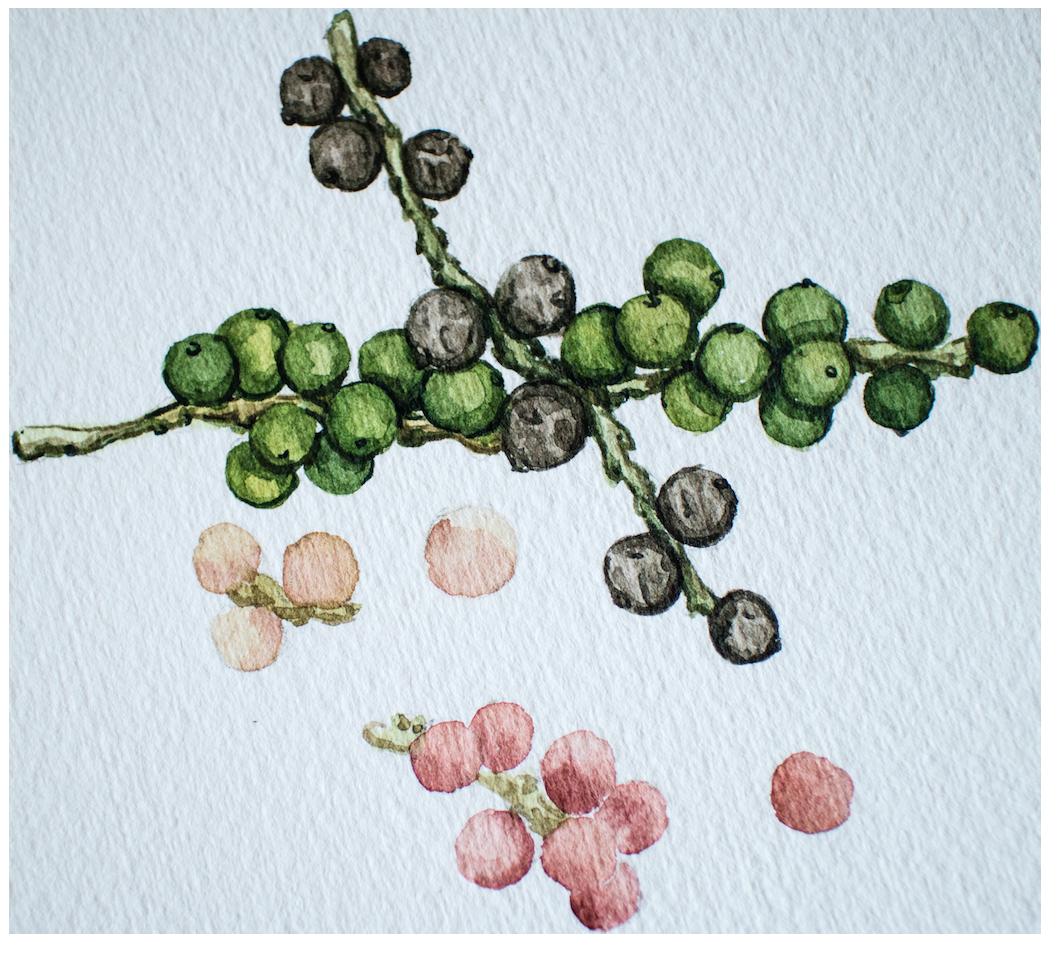 Piperine for Best Nootropics UK in Earth Grown Ingredients by Earthly Biotics