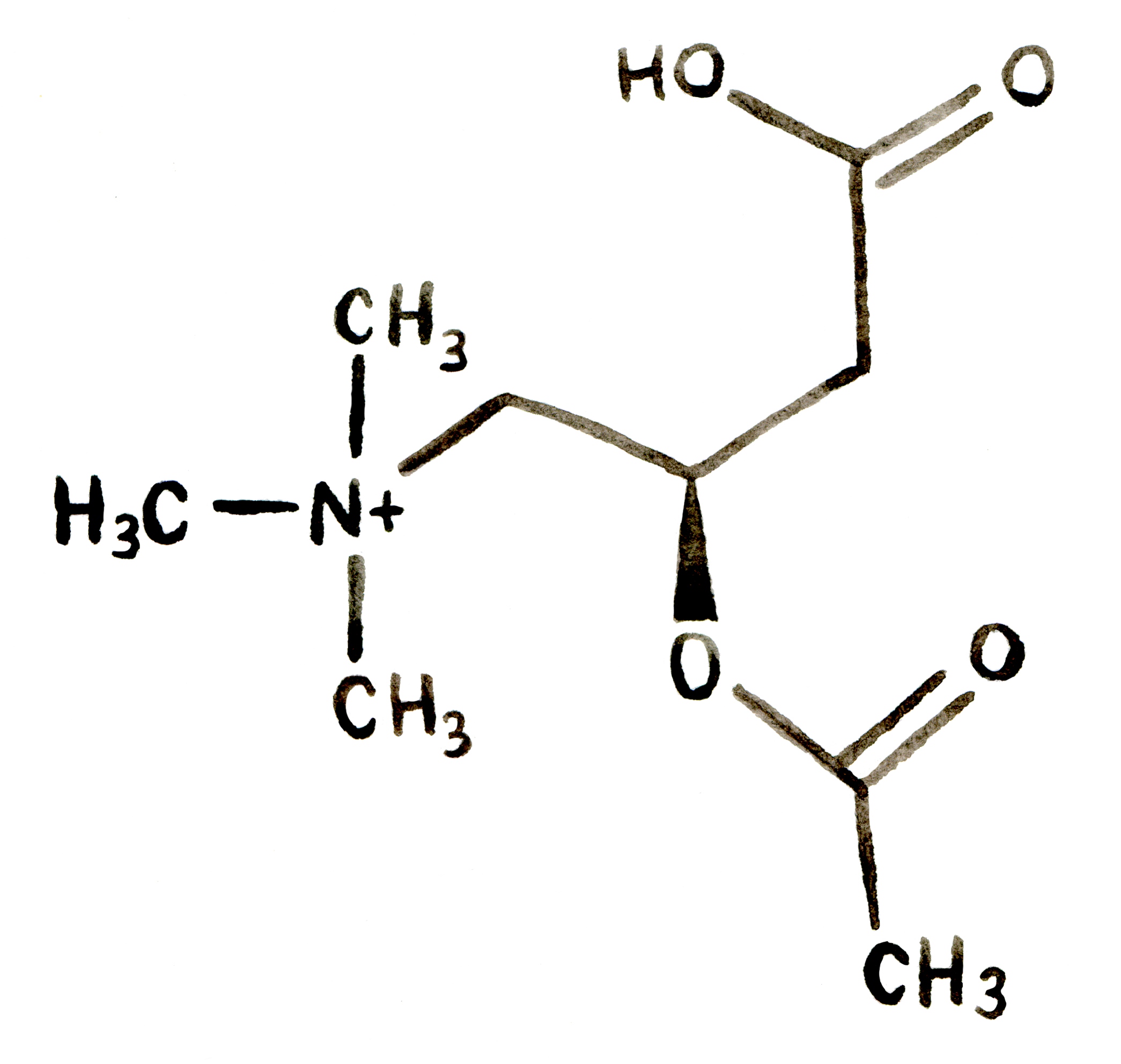 Structure-2-N-Acetyl L-Carnitine.png