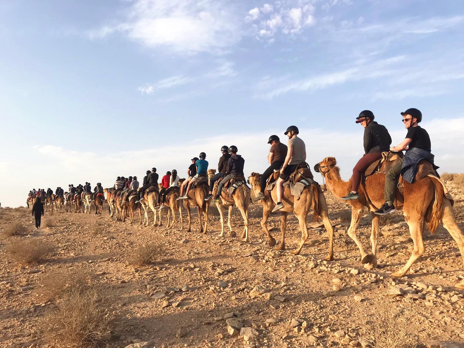 Camels Negev 1.JPG