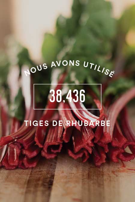 rhubarb.jpg
