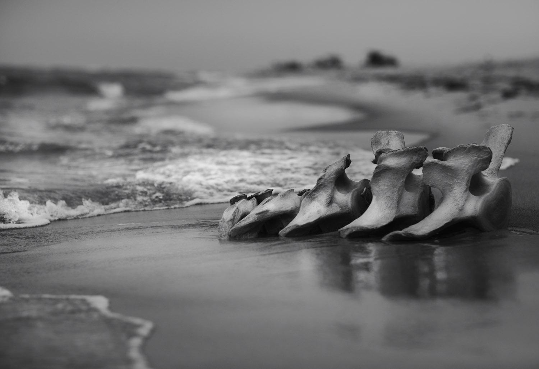 beachbone copy.jpg