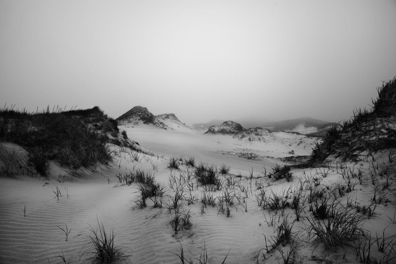 fog copy.jpg