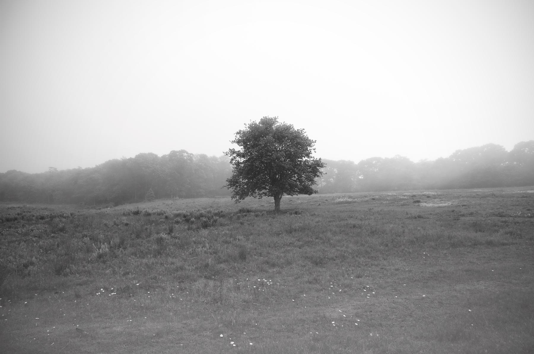 Vineyard.Tree_Print.jpg