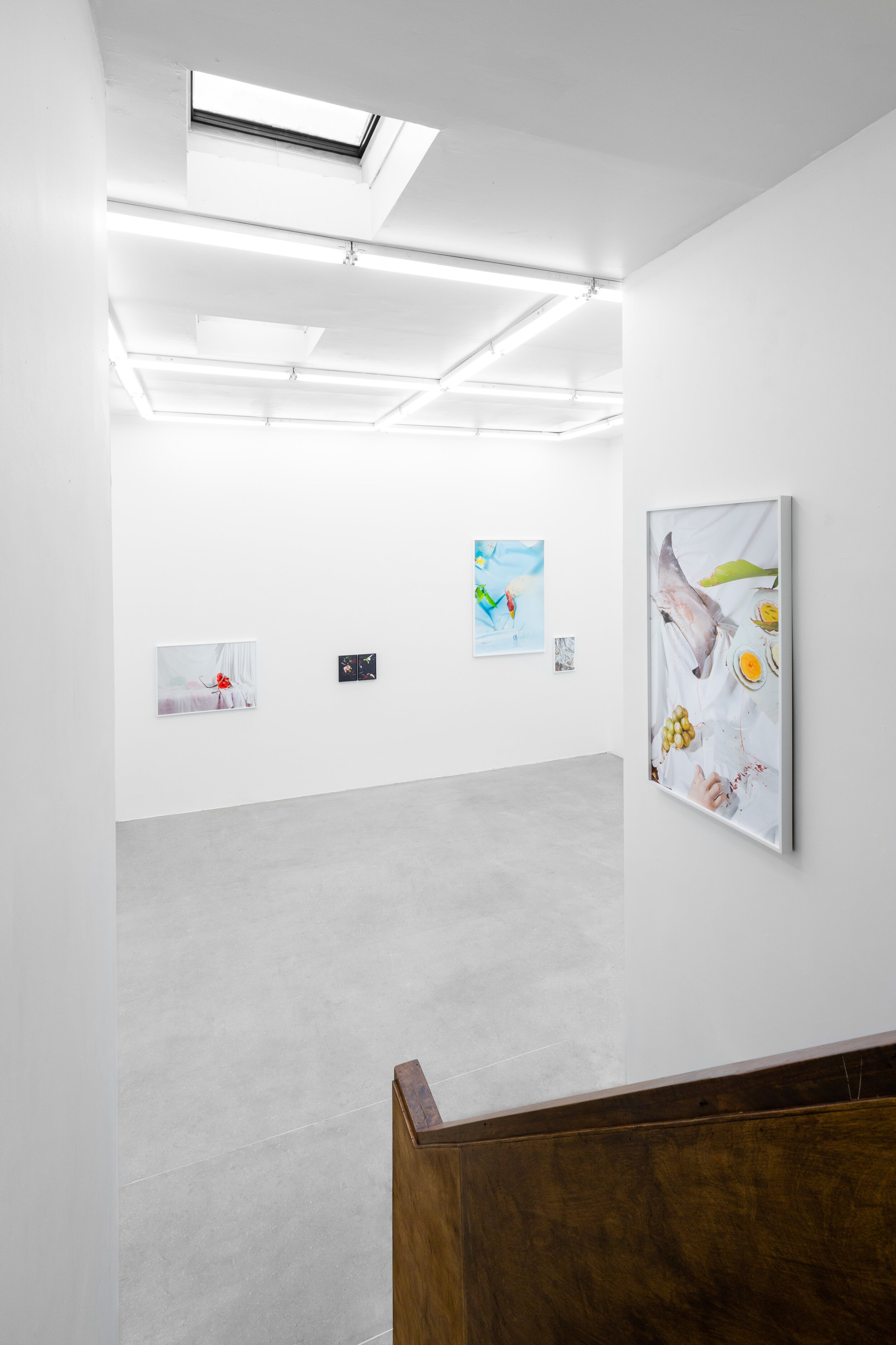 Installation View |  Offal  | Solo Exhibition by Arden Surdam | Image courtesy of Erik Bardin Photography