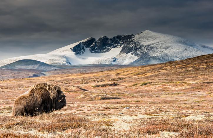 Romsdalsfjellene til Dovrefjell - 2018