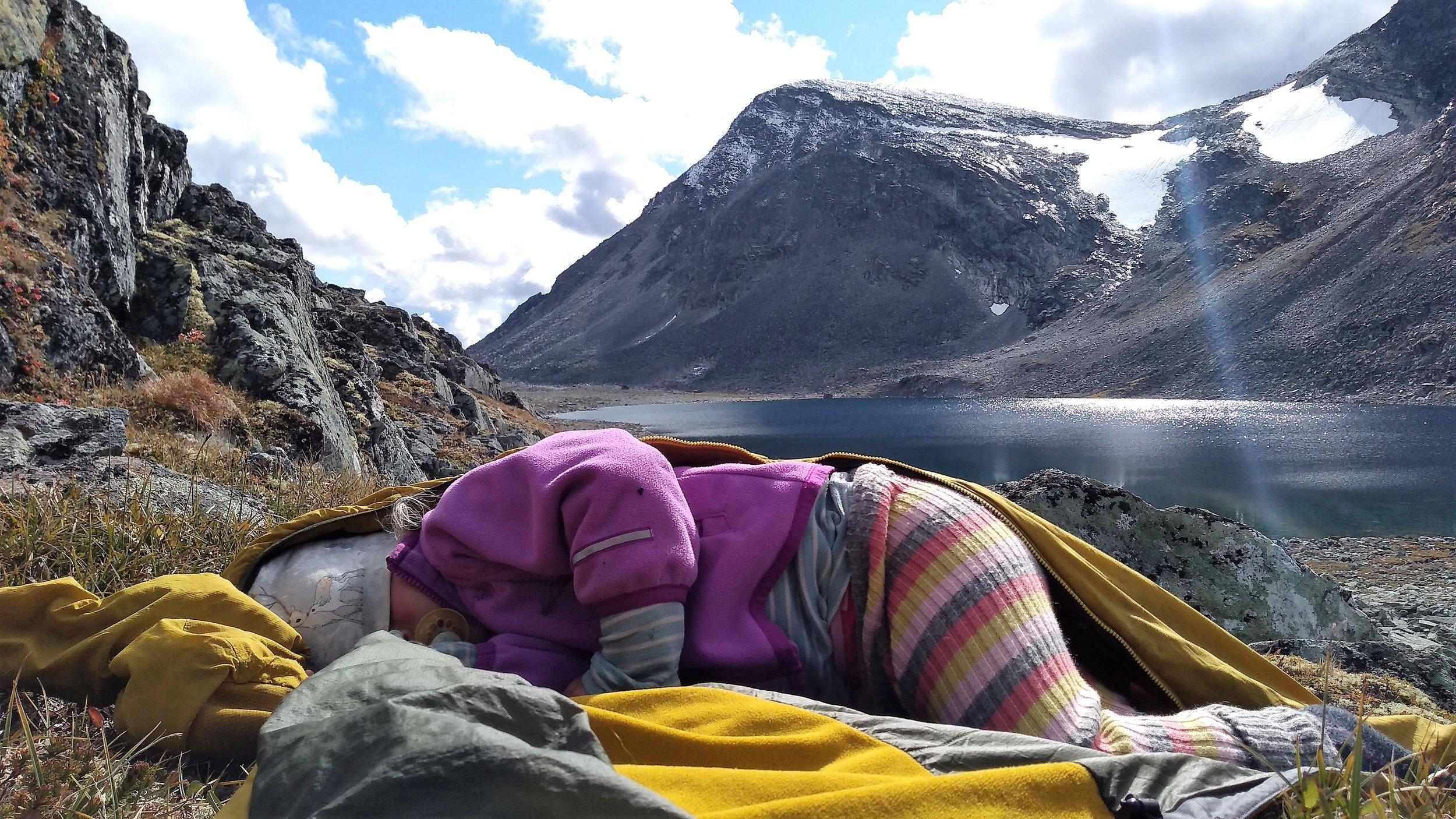 Fjellgeiter må også hvile. Oppe fra Grøvudalen i Sundalsfjella (ca 1450 moh)