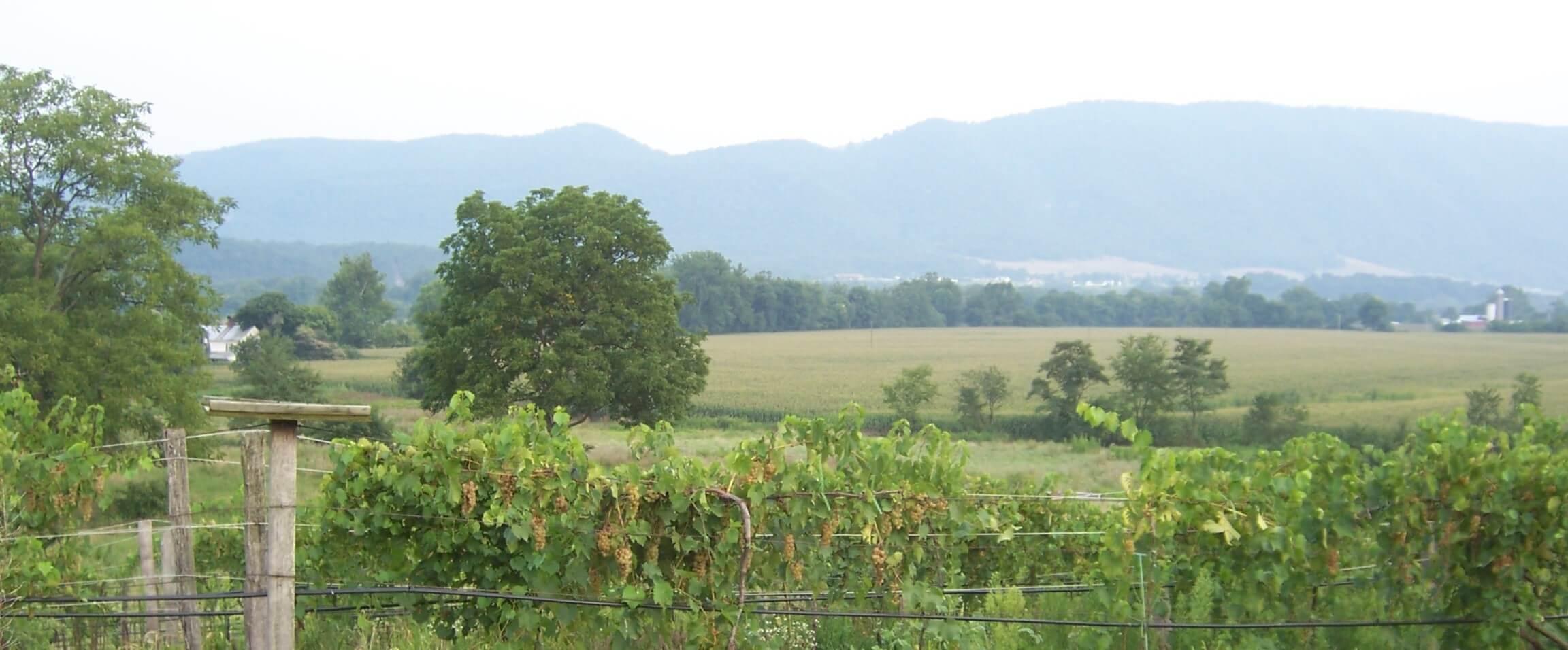 West Whitehill Farmscape 2.JPG