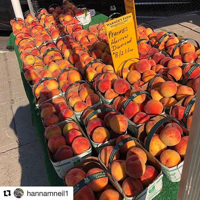 Peaches from our verified farmer @warnersfarm in Niagara!!!! Yaaaay!!!! #Repost @hannamneil1 with @get_repost ・・・ Peaches!  Get down to @ptborfm