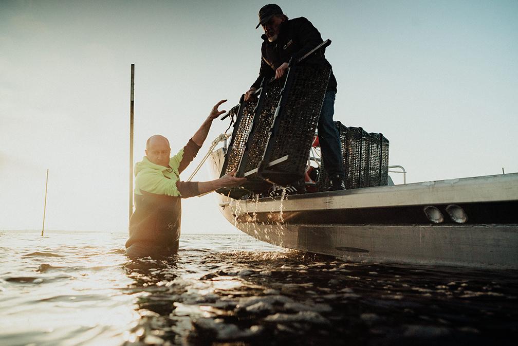 Tarkine Fresh Oysters - Jarrad and Jon Lease.jpg