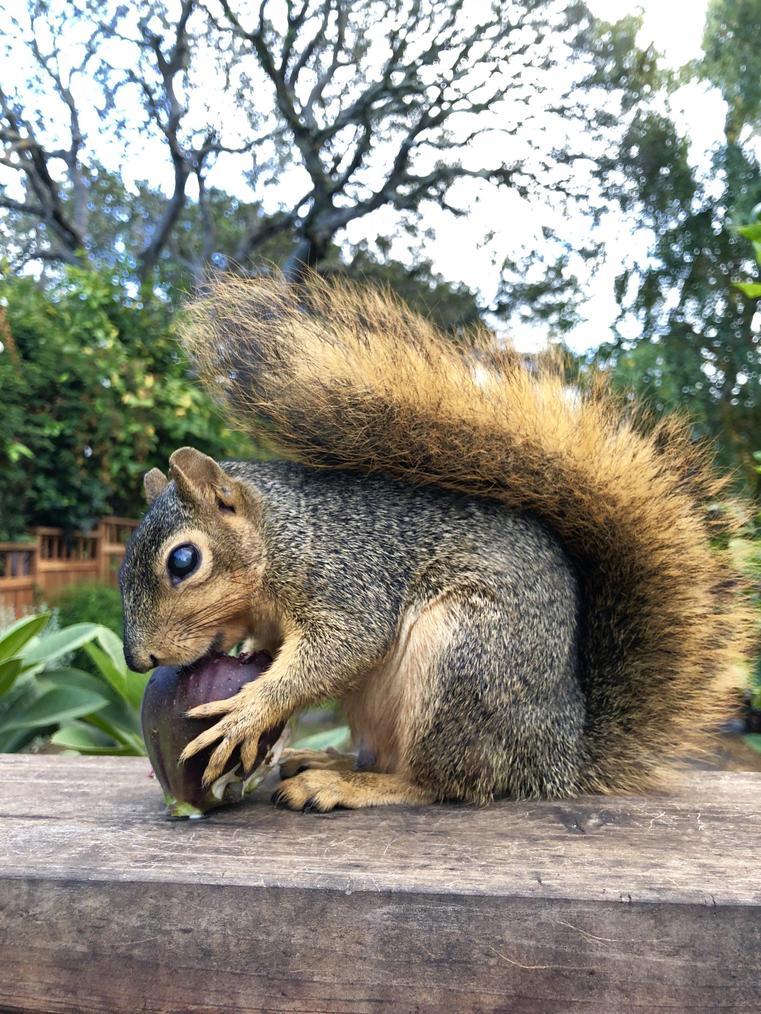 Eddie the Squirrel