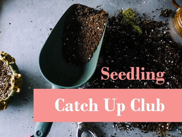 Join us for our next Arts West artist's networking event, Catch Up Club: Seedling. Sunday, October 20 at @woods-street-arts-space  https://www.artswest.com.au/events/2019/9/19/catch-up-club-seedling