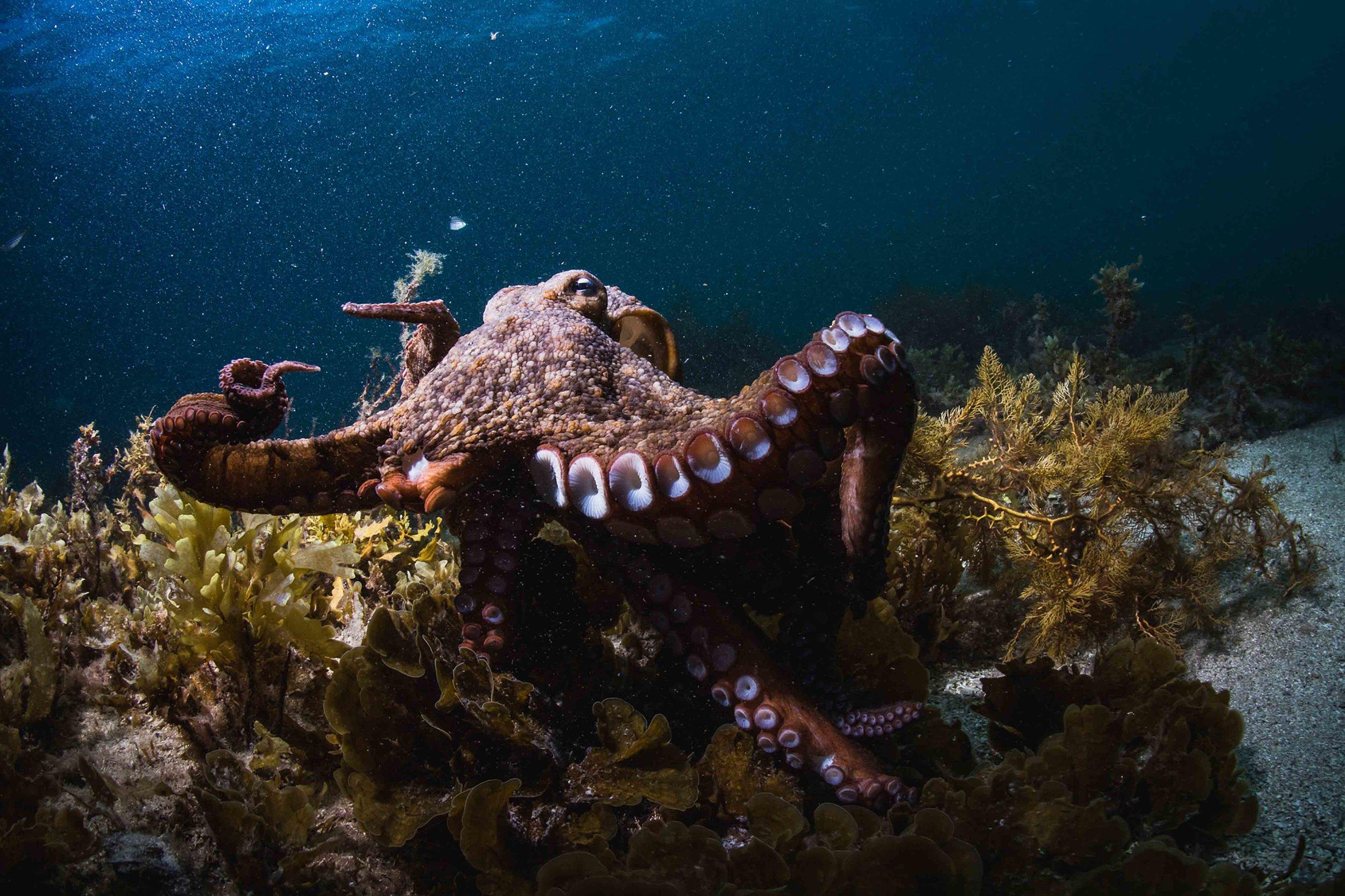 octopus_alex-pike.jpg