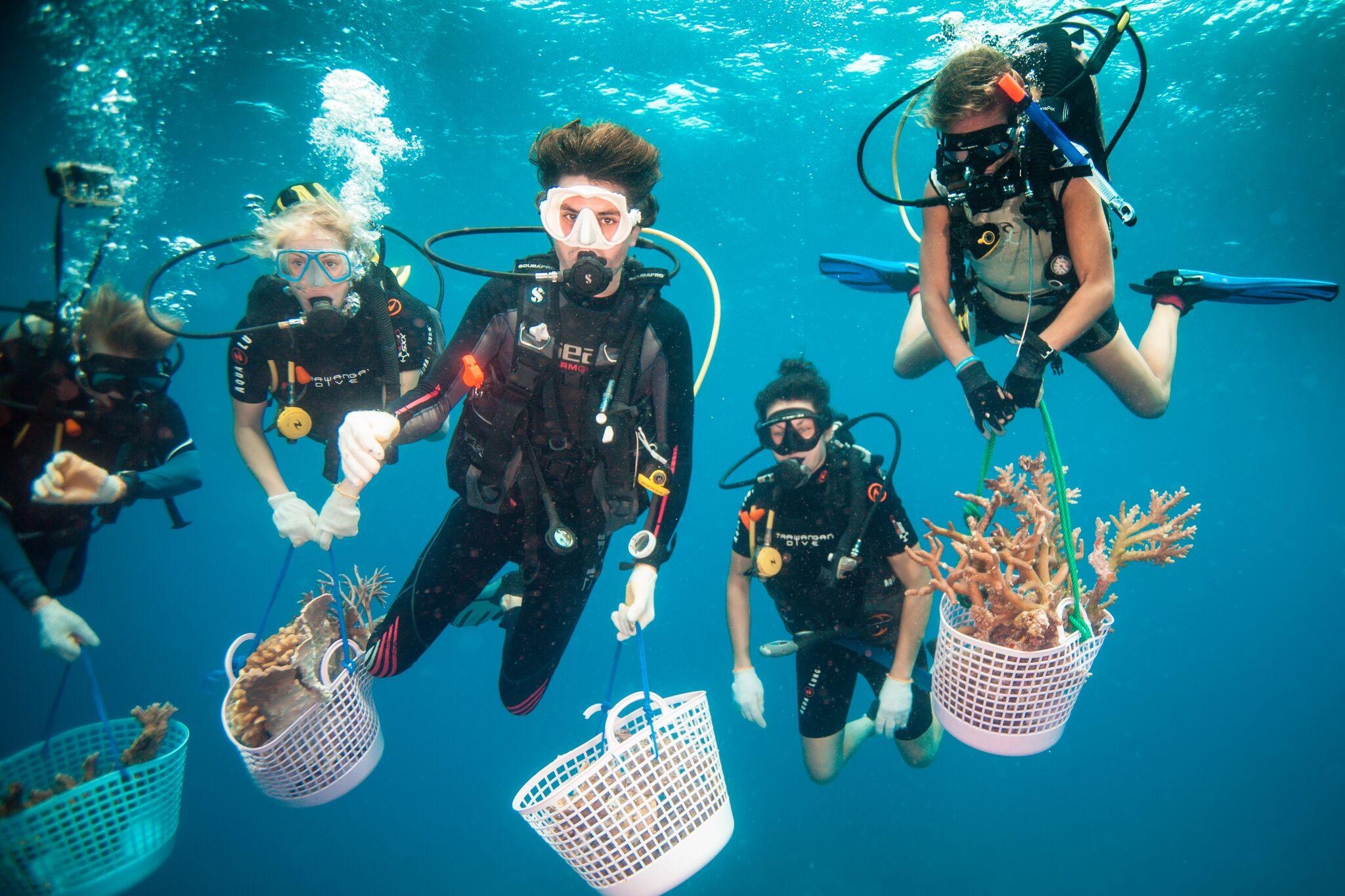 Coral gardening