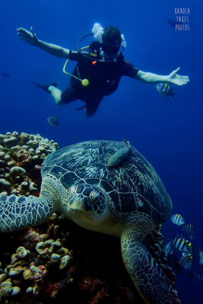 OW - Diver Turtle Heaven - reduced.jpg