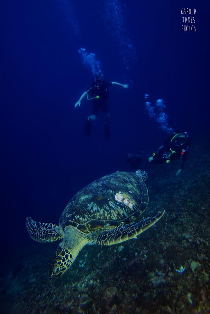 OW - Turtles Divers - reduced.jpg