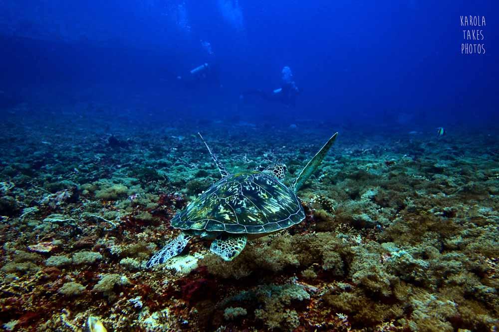 SD - Turtle Close - reduced.jpg