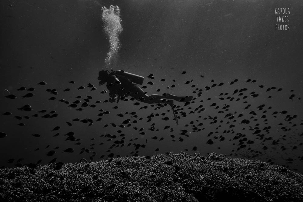 AOW - BW Diver - reduced.jpg
