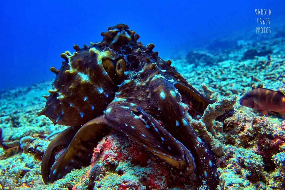 PTO - Octopus - reduced.jpg