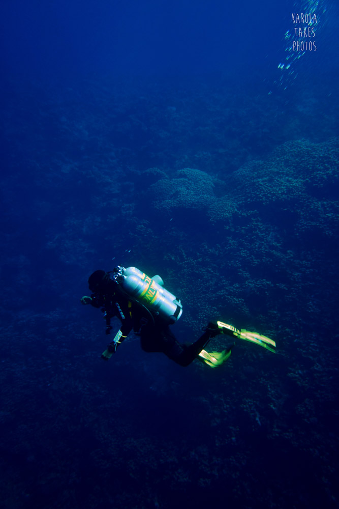 SRF - Diver above Reef - reduced.jpg
