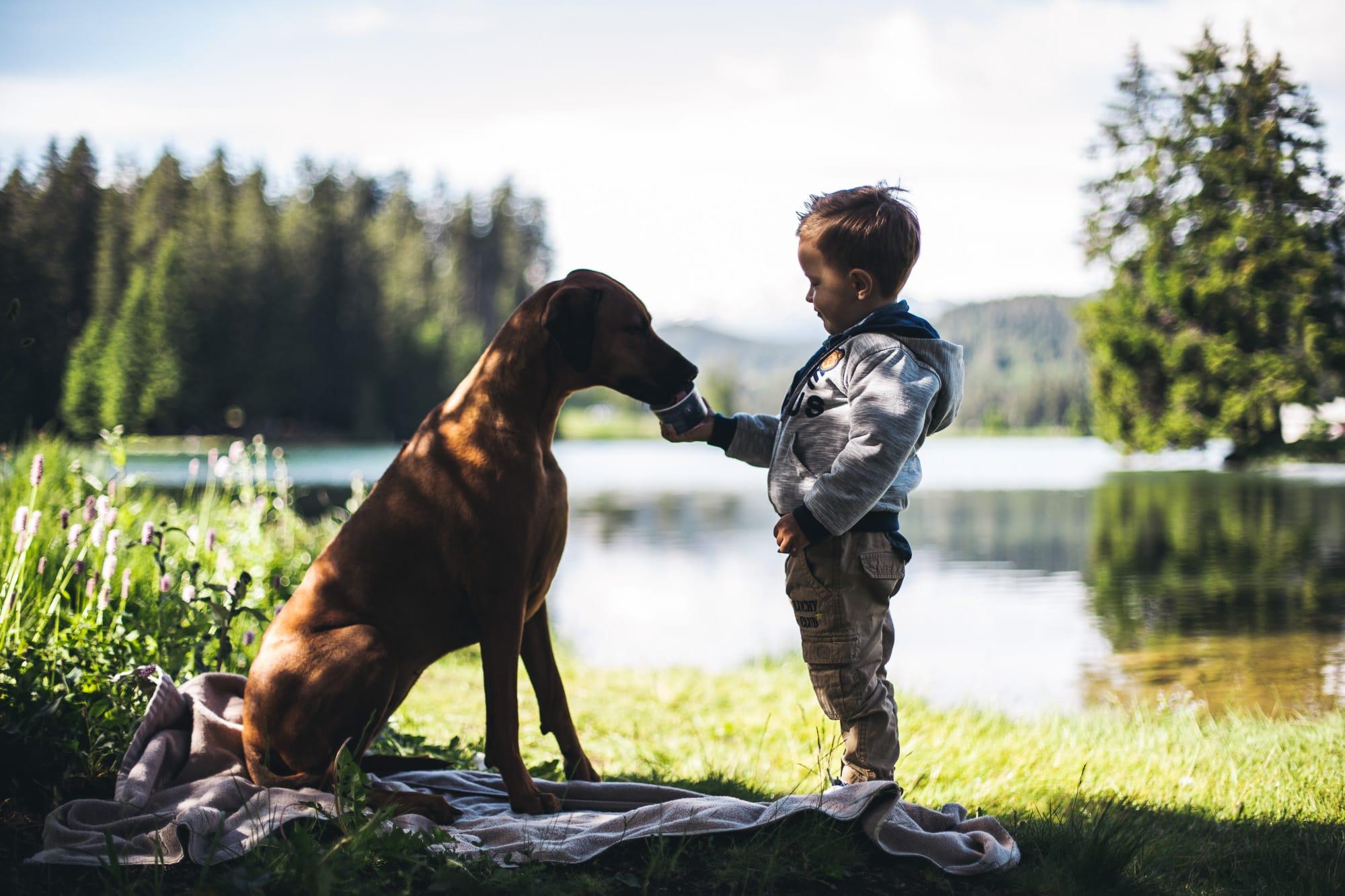Kind gibt Hund ein Schnauziis