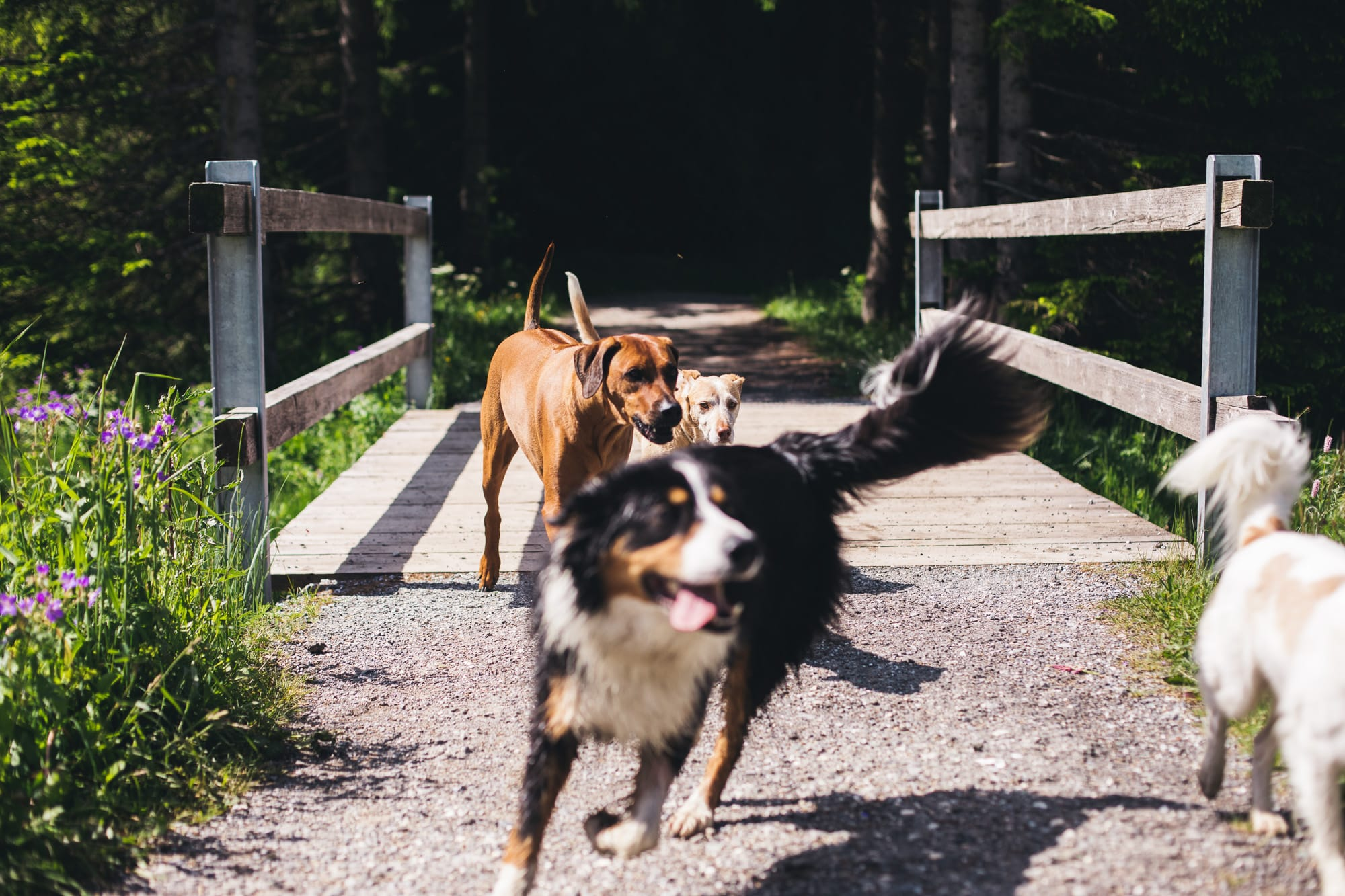 Hunde am Heidsee