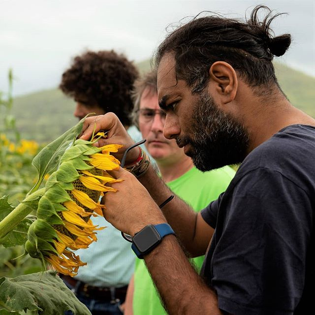 Chefs @gaggan_anand and @AndoniLuisAduriz look at sunflowers grown by Timothy, a Tanzanian farmer working with @Farm_Africa to trial the use of drought-tolerant plants that produce larger flower heads with higher yields of seeds. 🌻🌻🌻 Photo: @elizapowellphotography #ChefsForChange #Worlds50Best #Gaggan #GagganAnand #AndoniLuisAduriz #Mugaritz #FarmAfrica #Tanzania #Sunflower #Sunflowers #Agriculture #Farming #Farm #Sustainability