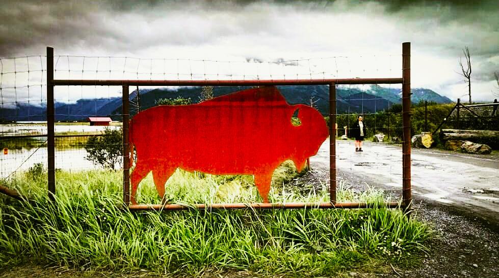 Alaska Wildlife Conservation Center - Iron Bison & Human