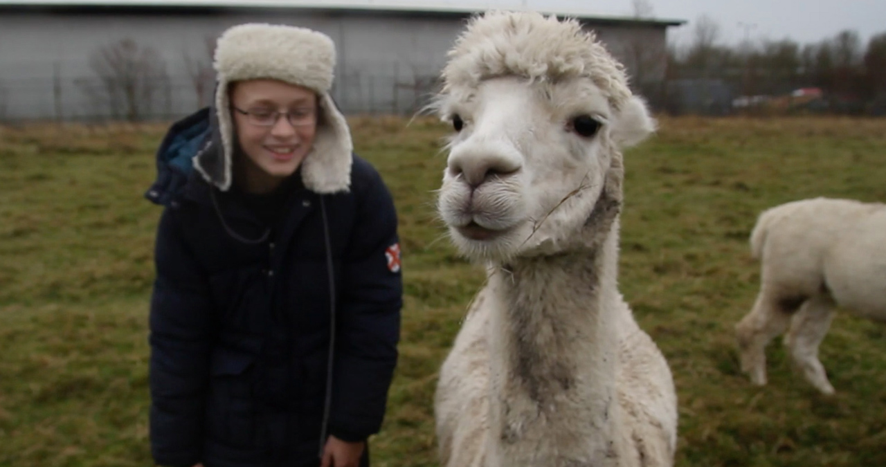 A boy in a hat stands next to a llama. A still from a music video for Transitions: a Rap by 7B.
