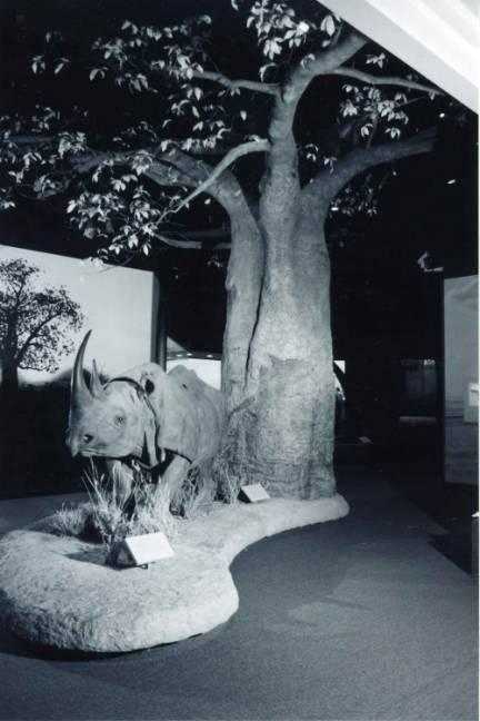 Baobab Tree Armature