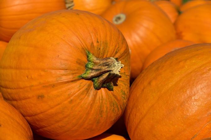 pumpkin-3636243_960_720.jpg