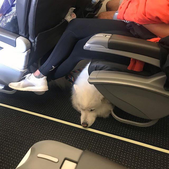My seat neighbor is a polar bear!