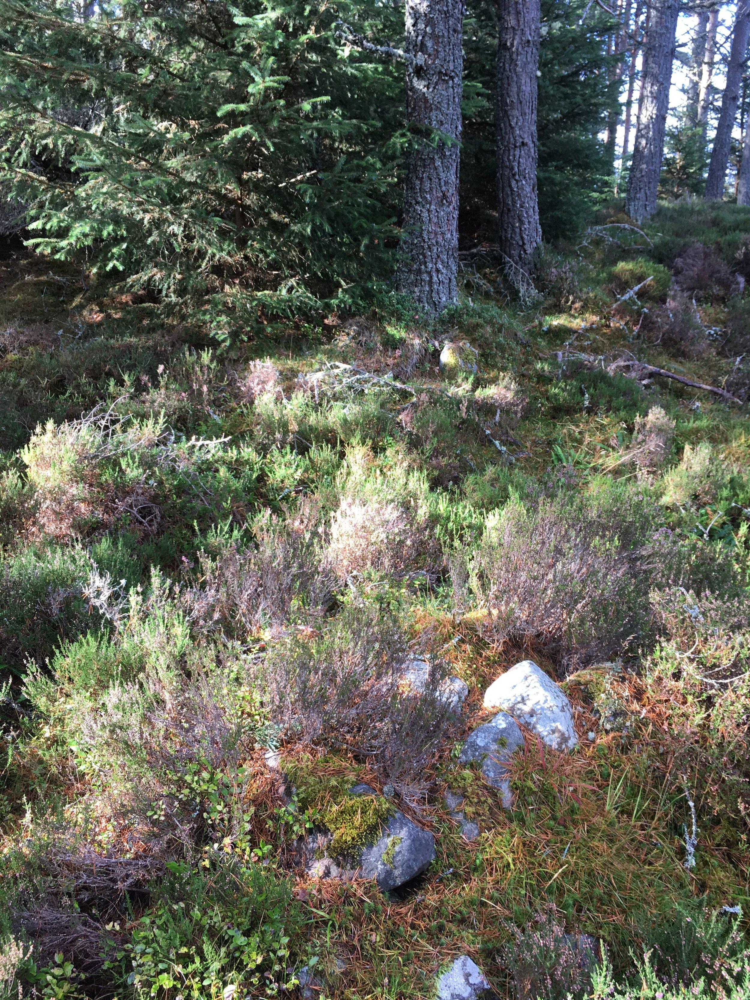 Uaigh an duine bheò / The Living man's grave