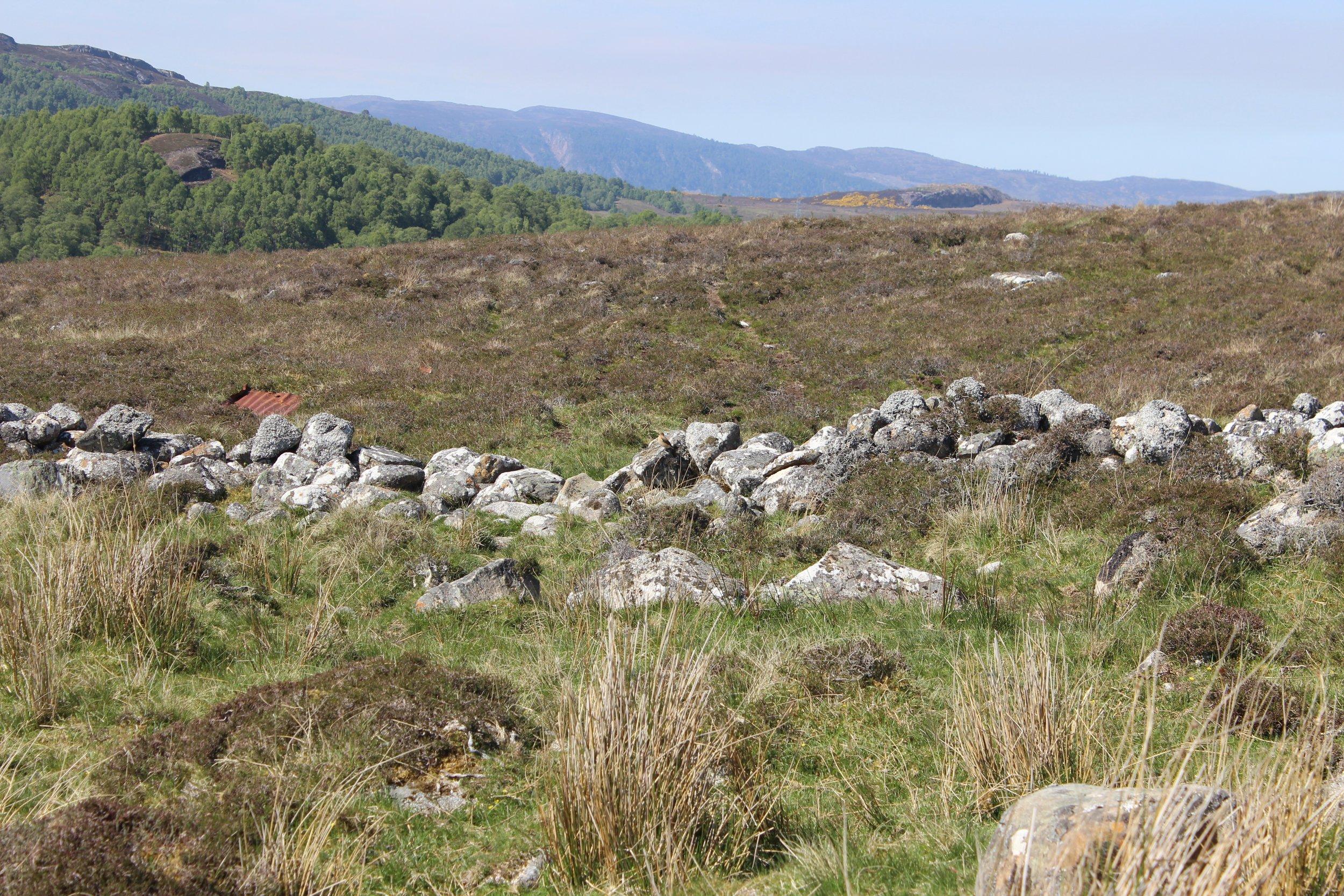 clacharan na shuidh air clach - an lorg thu e? / wheatear - can you spot it?
