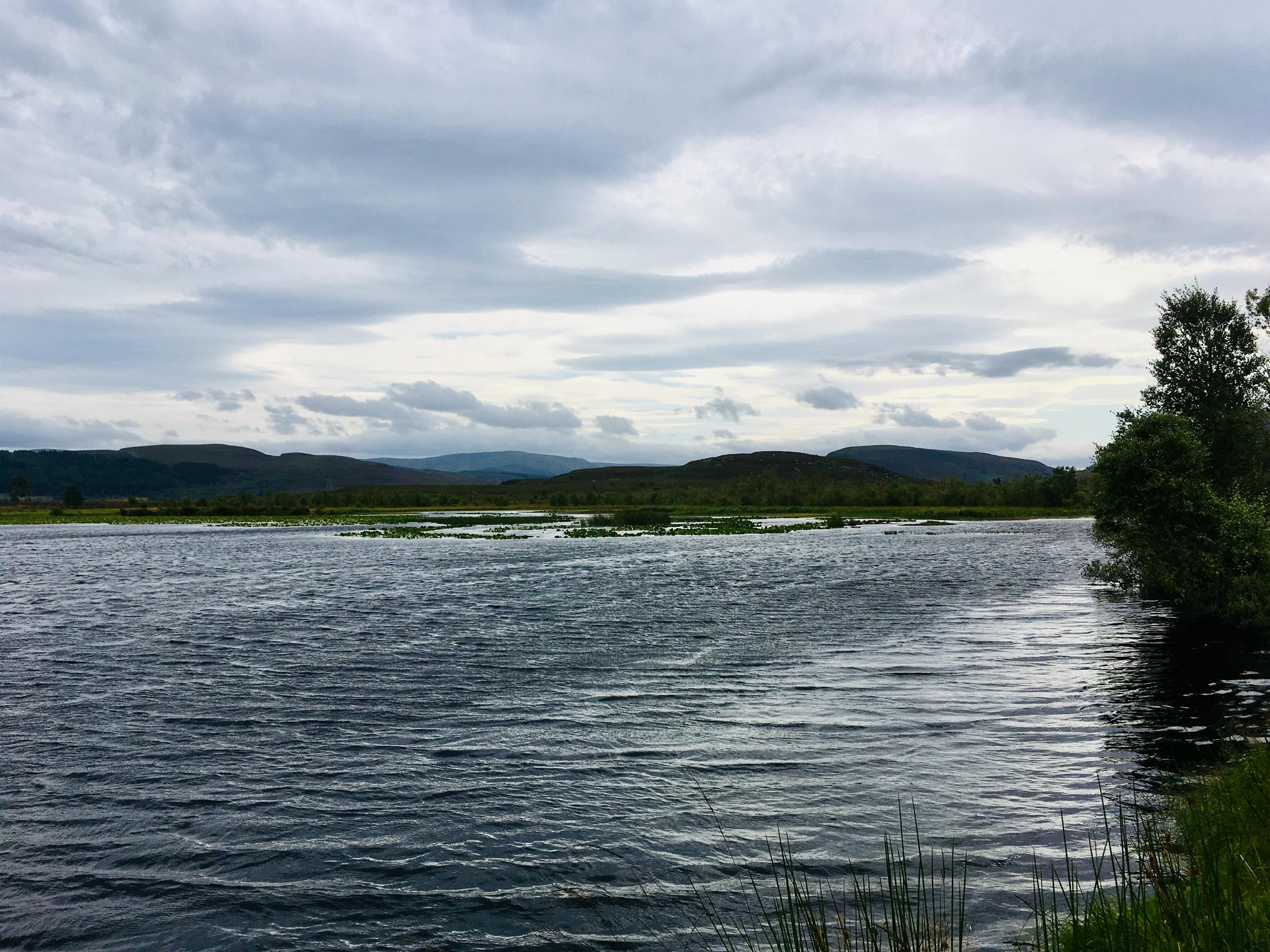 Loch an Eòin Ruadh - bha iad a-measg an luachair is a' snàmh mu cheann an loch - cha robh an camera làidir gu leòr!