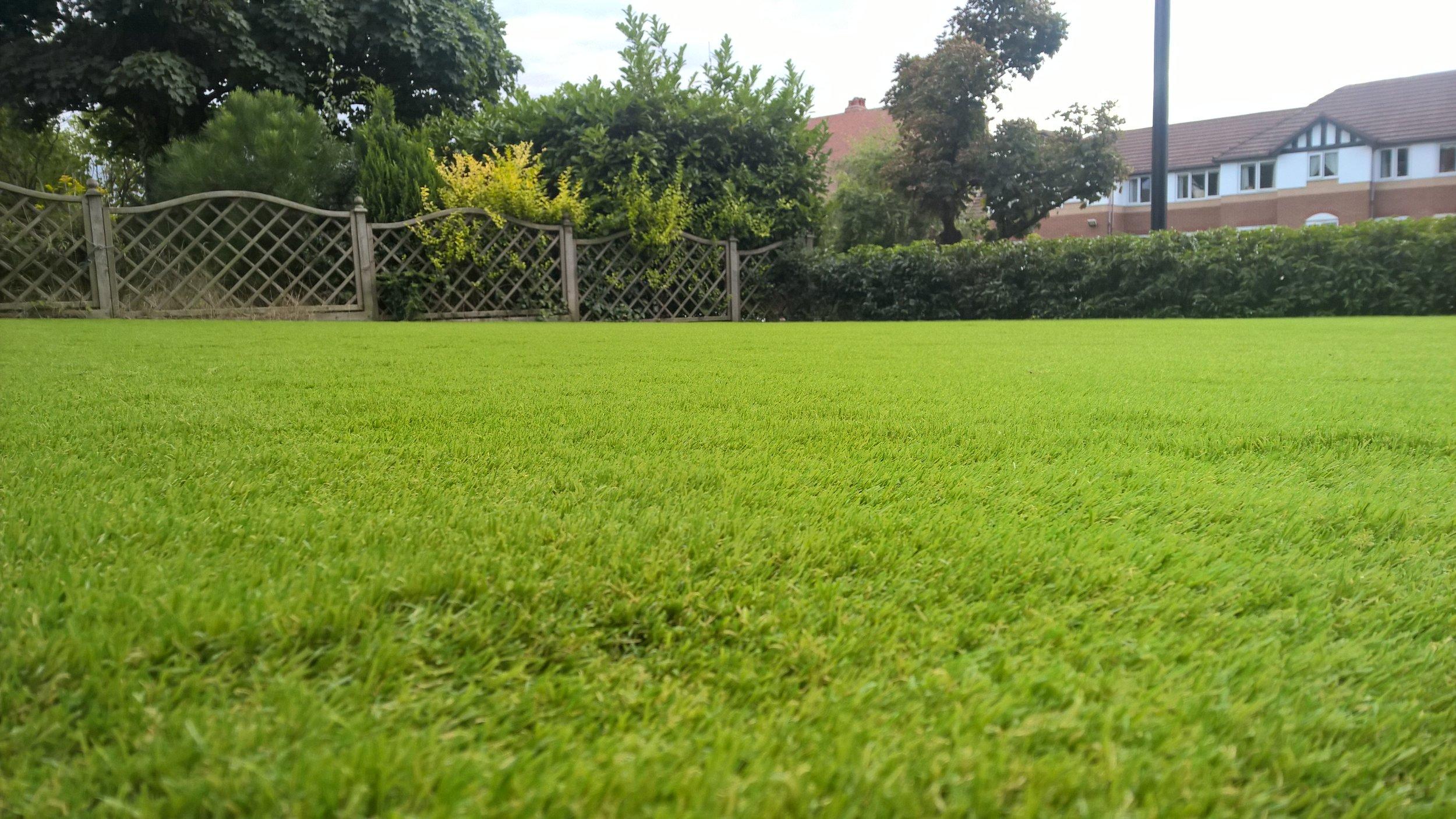 front_grass_closeup.jpg