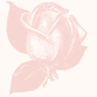Amaruanka_Rose_Small.jpg