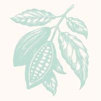 Amaruanka_Cacao.jpg