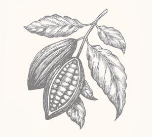 cacao-tree.jpg