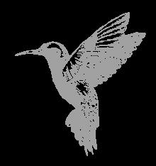 Amaruanka_Hummingbird_Small-Grey.png