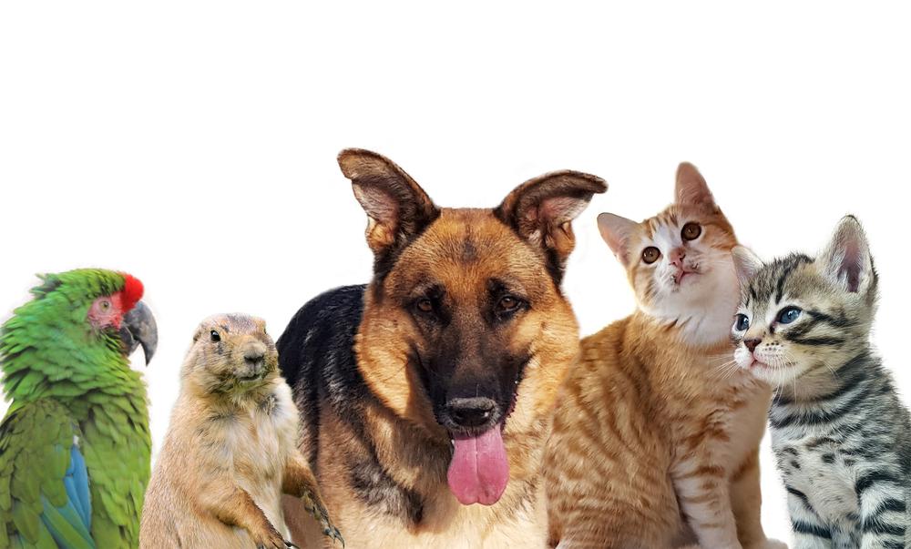 pets_shutterstock_510859414.jpg