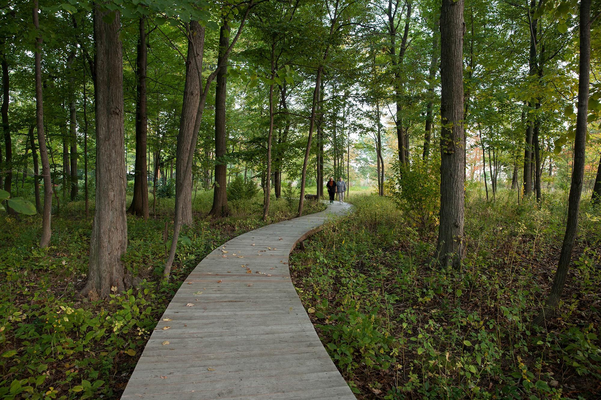 Black Locust   Boardwalk Lake Forest, IL