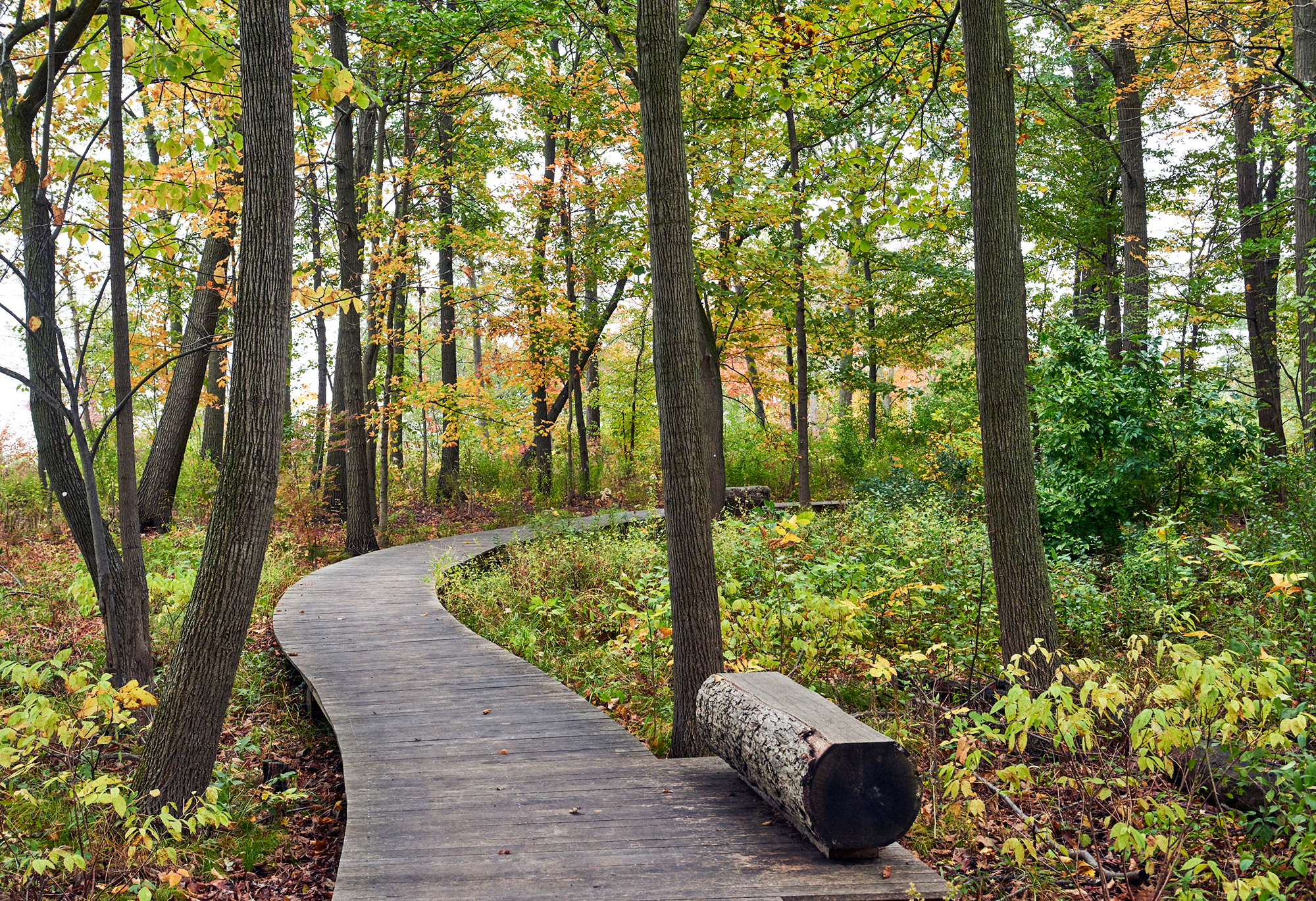 Black Locust and White Oak  Boardwalk and Bench Lake Forest, IL