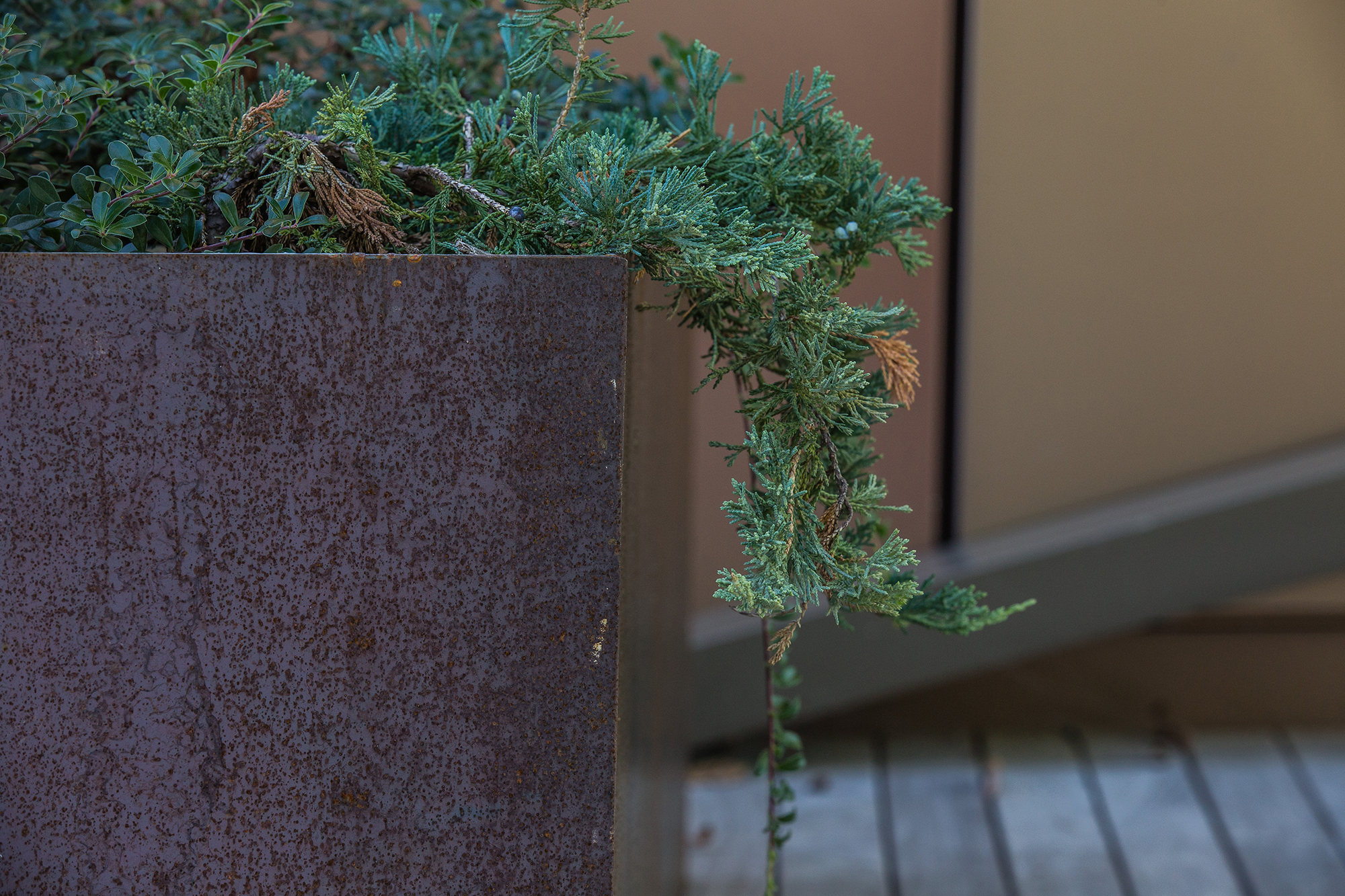 Weathering Steel  Planter at Rooftop Courtyard University of Massachusetts Amherst
