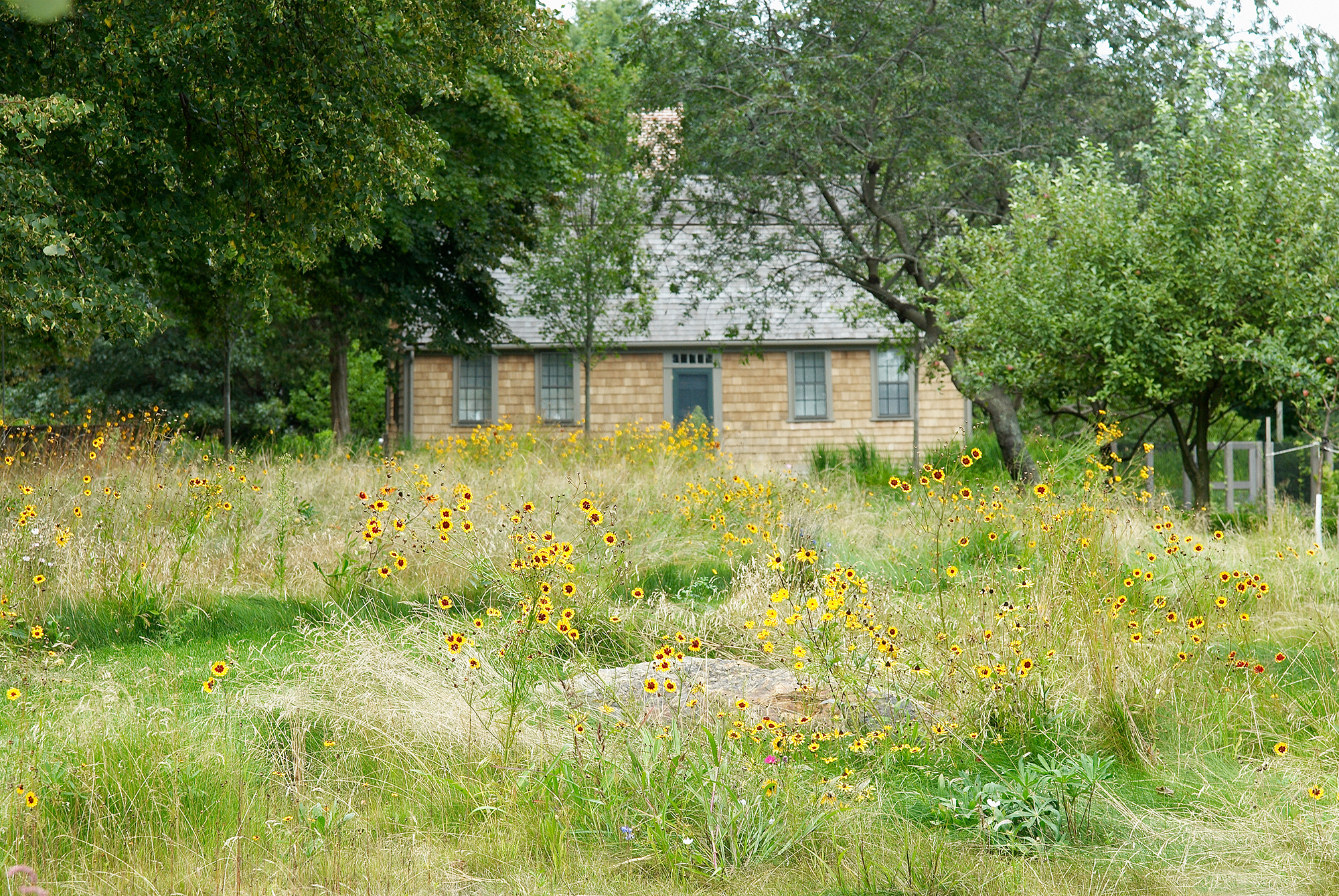 Meadow Restoration  Duxbury, MA