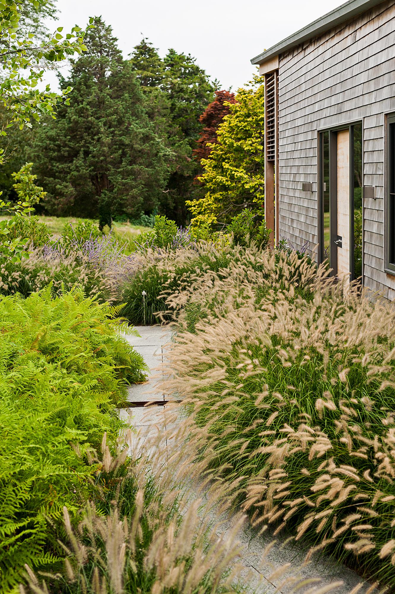 Fountain Grass   Cove House