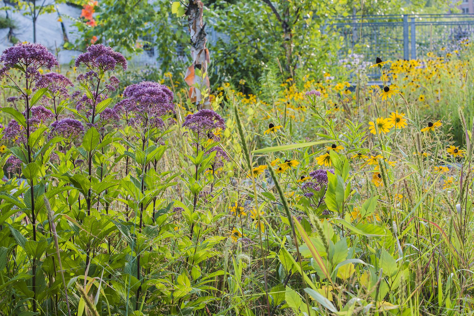 Ferrous Site Plants 1.jpg