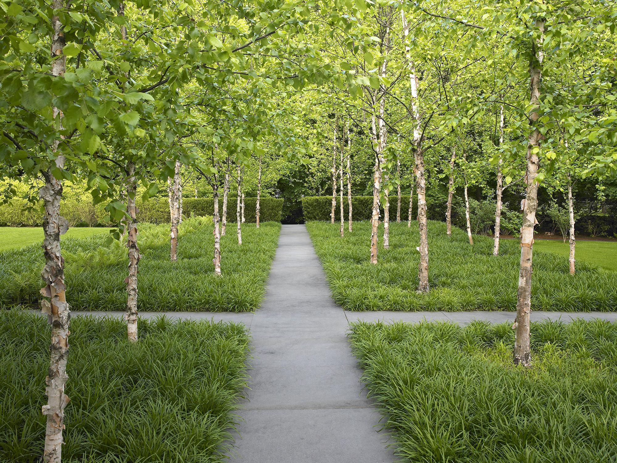 River Birch Grove  Greenwhich Garden