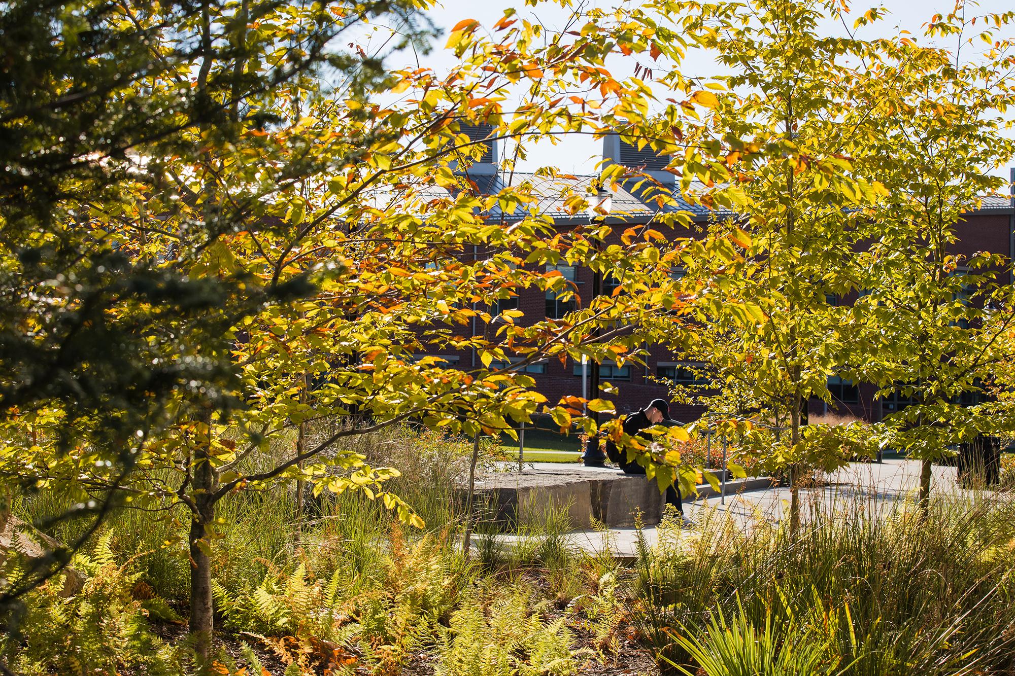 Beech Grove  UMass Design Building Amherst, MA