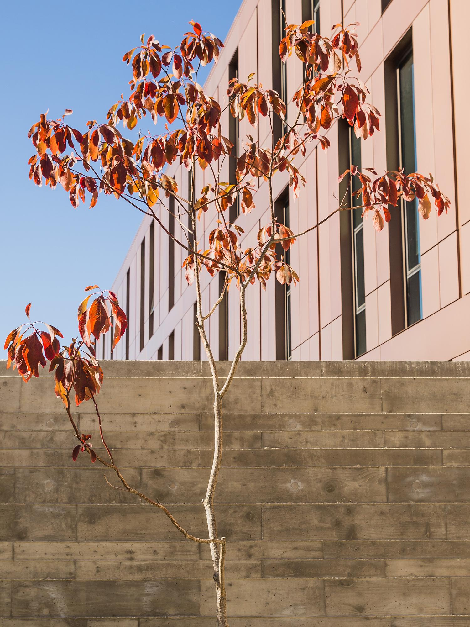 Sassafras  UMass Design Building Amherst, MA